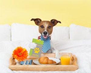 cane albergo
