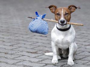cane in pensione