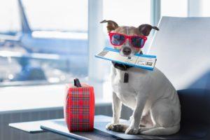 in aereo con cane