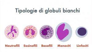 tipologie-di-globuli-bianchi