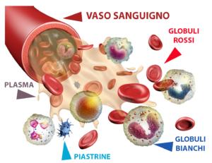 vaso-sanguigno