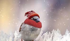 cappello sciarpa