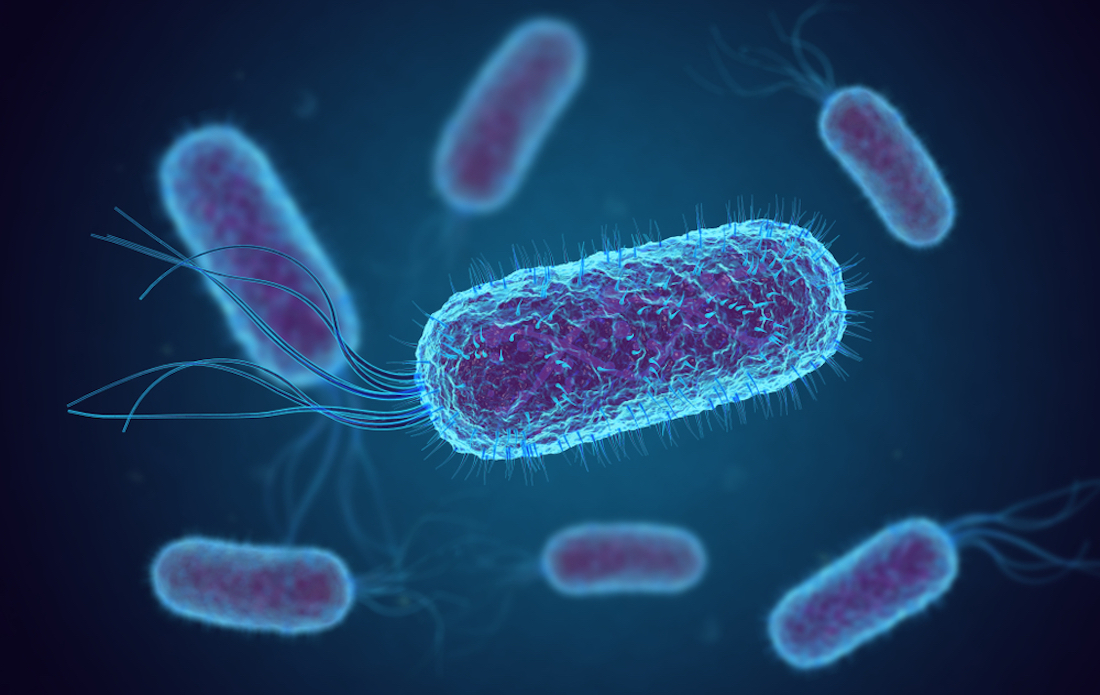 L'infezione da Escherichia coli